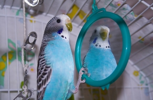 Bird in mirror