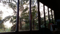 Open windows look out to a forest of trees
