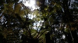 Tall ferns