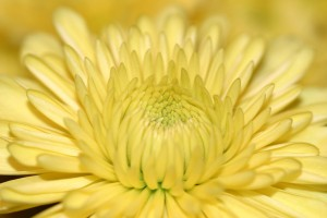 yellow-flower-1542055