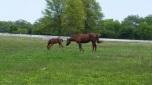 Visiting a horse farm
