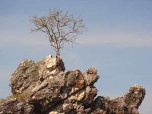 tree-on-rock-1156784