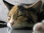 Take a cat nap